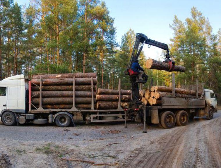 Blog Duurzaam verantwoord hout